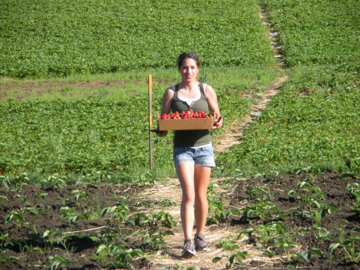 Staff member carrying a box of strawberries in the strawberry patch