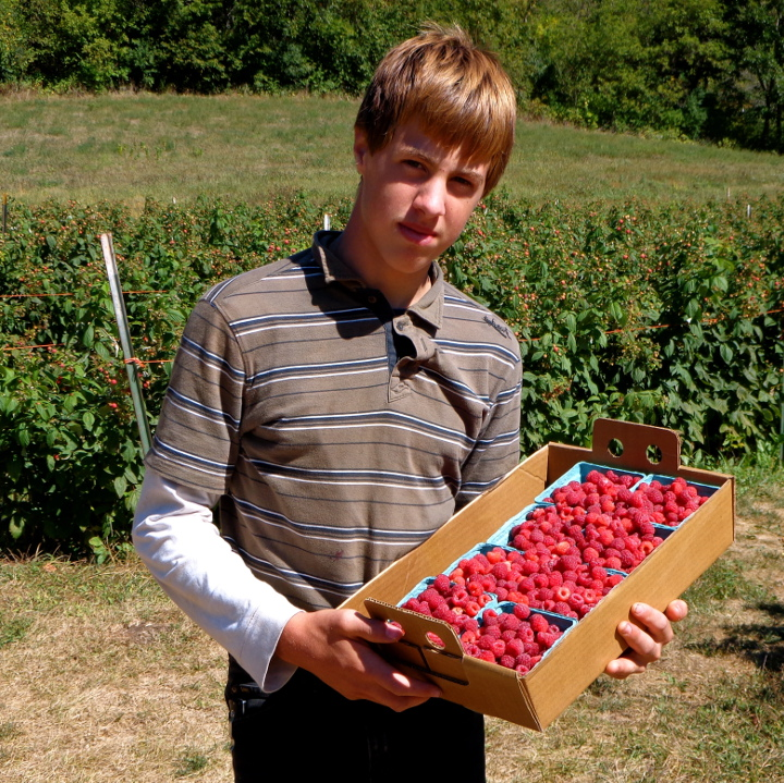 Young man with boxes of picked raspberries